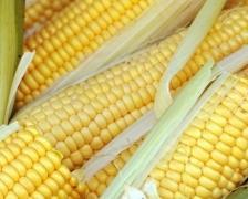 corn224
