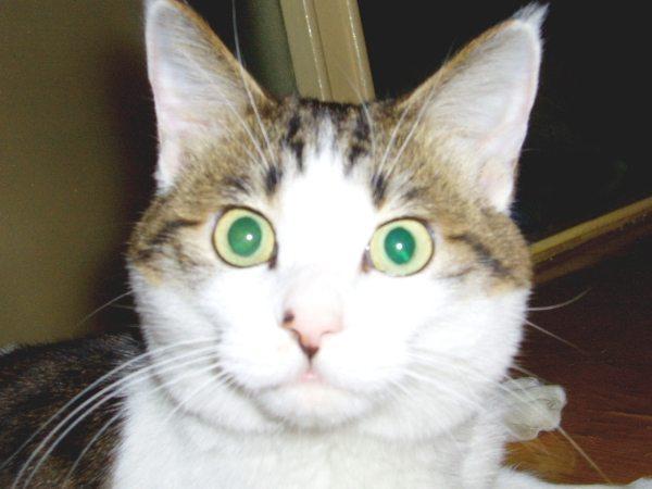 epilepsy cat