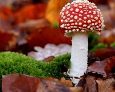mushroom224