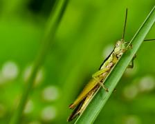 A picture of a green insect by freedigitalphotos.net/sweetcrisis