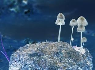 A picture of mushrooms