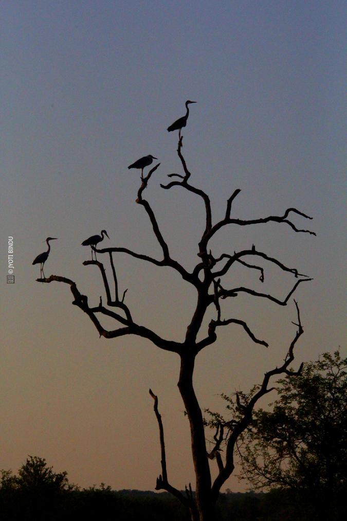 Africa by Jyoti Bindu