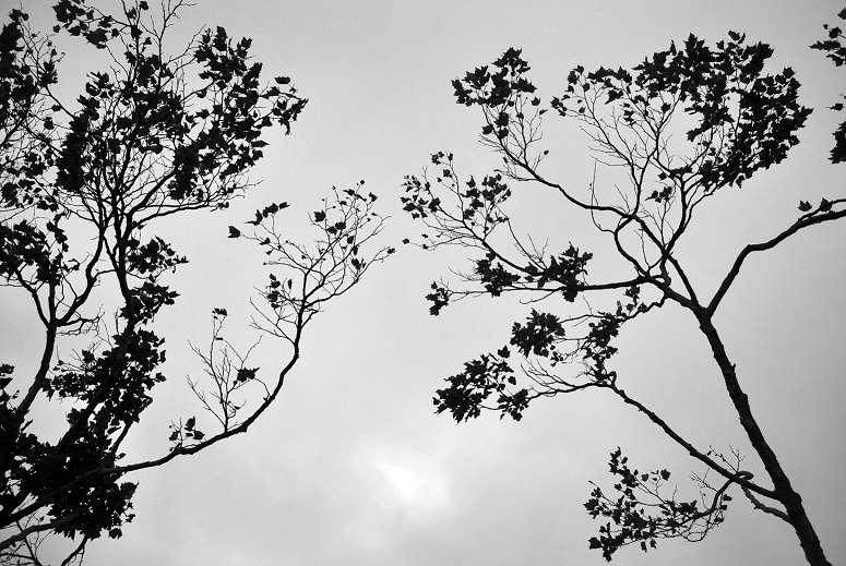 Untitled by Sepa Sama
