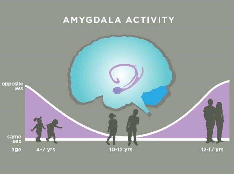 Amygdala activity by Julie McMahon