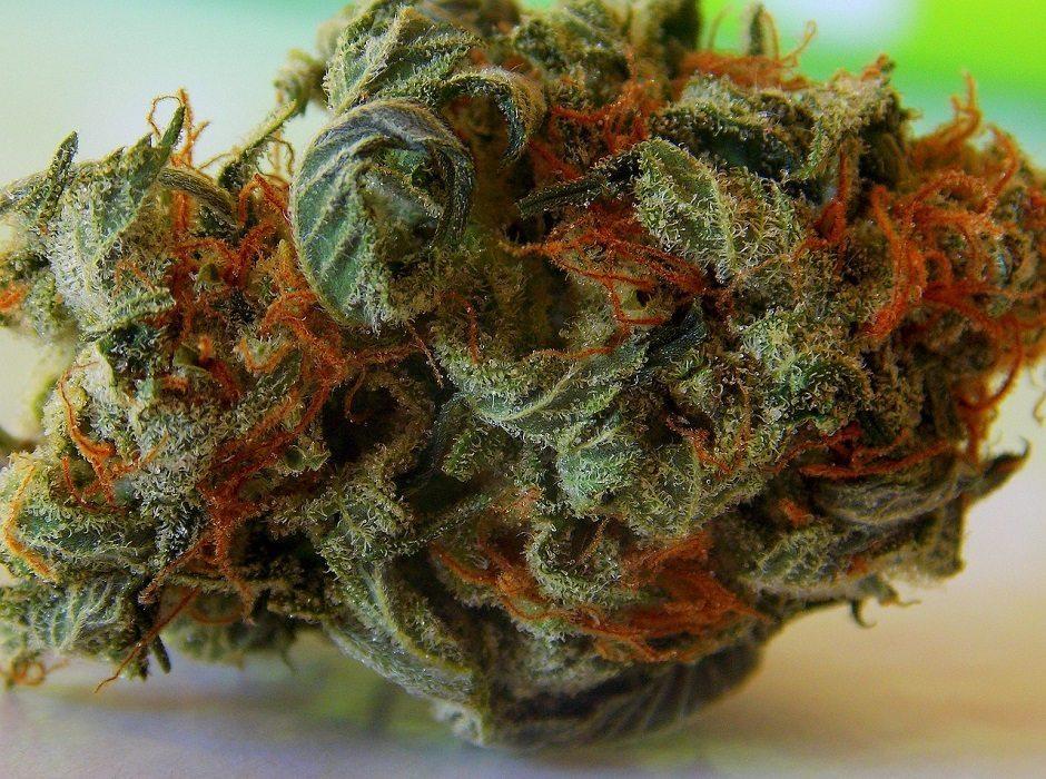 cannabis by Maria Huxley