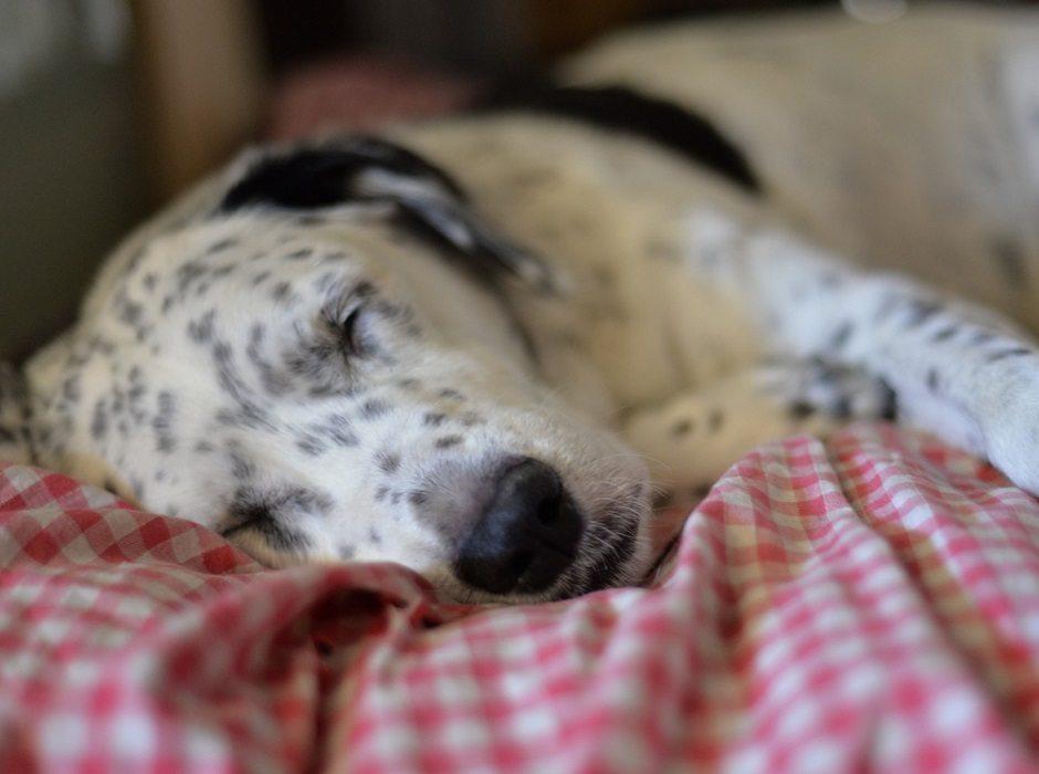 sleeping dog by Woodsie