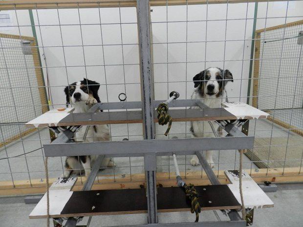 dogs by Mylène Quervel-ChaumetteVetmeduni Vienna