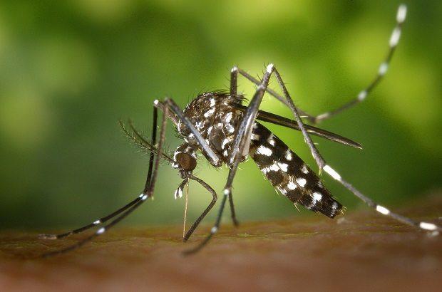 tiger-mosquito, eradicate itching