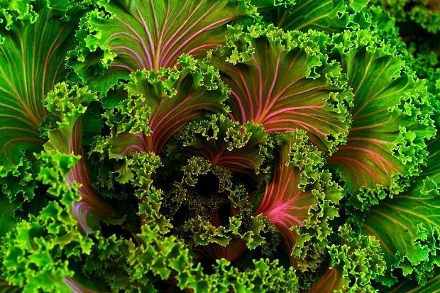 kale, healthier diet
