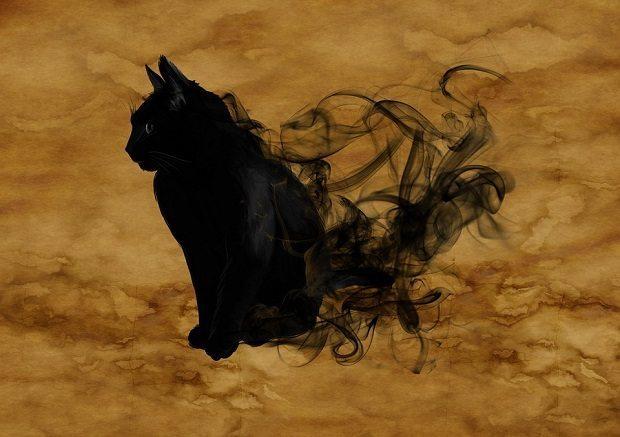 Cat, quantum surrealism