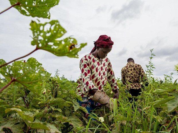climate change, farming
