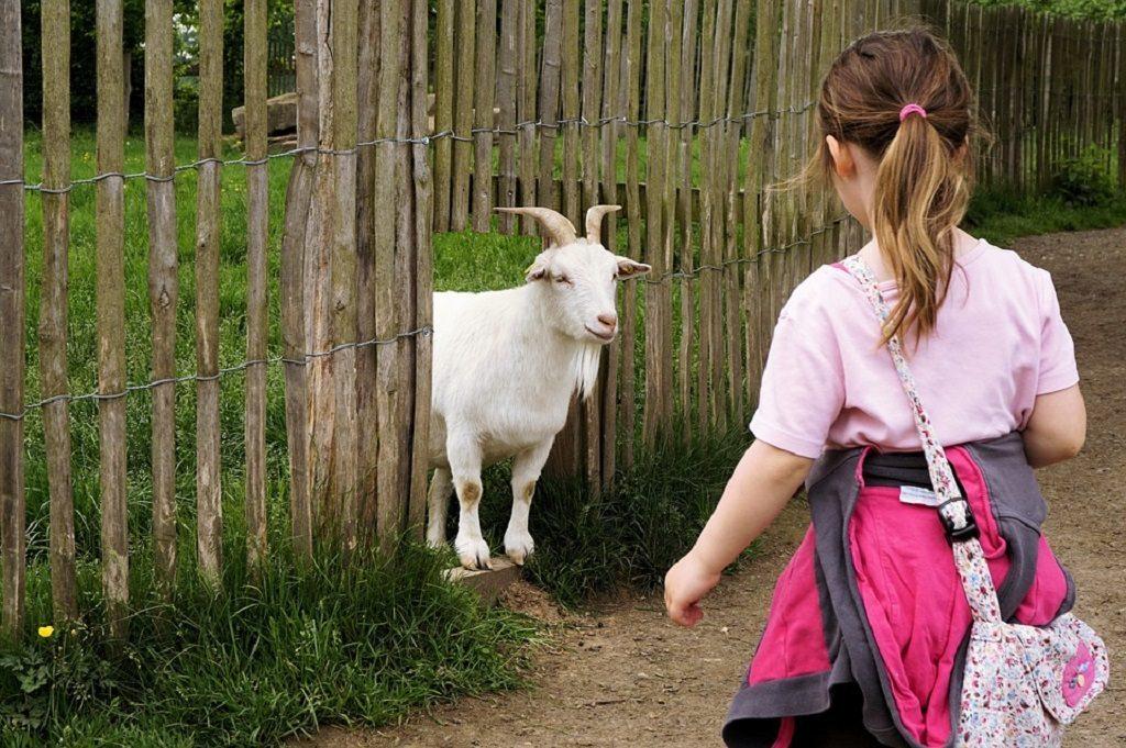 goat by pixabay and webandi