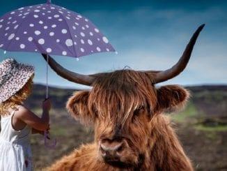 Girl and highland cow