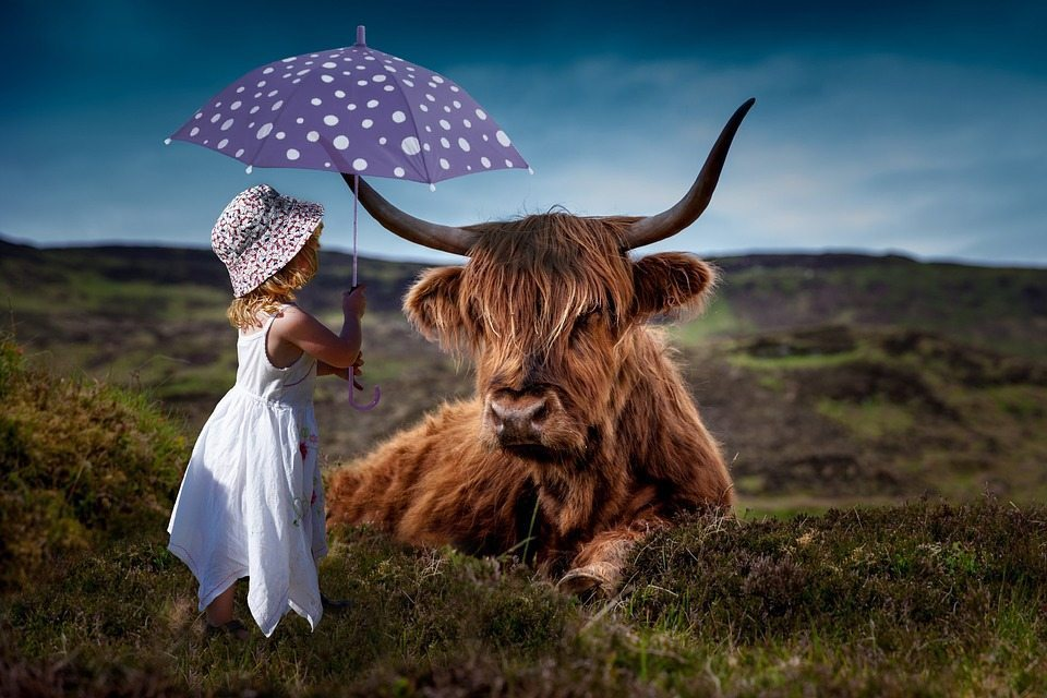 Girl and highland cow, artificial intelligence