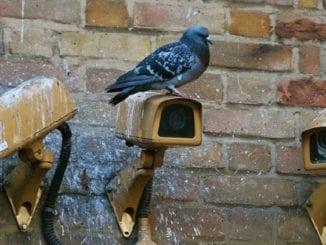 camera, surveillance, web browsing history