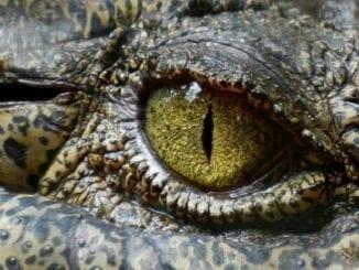 crocodile, neurocinematic methods