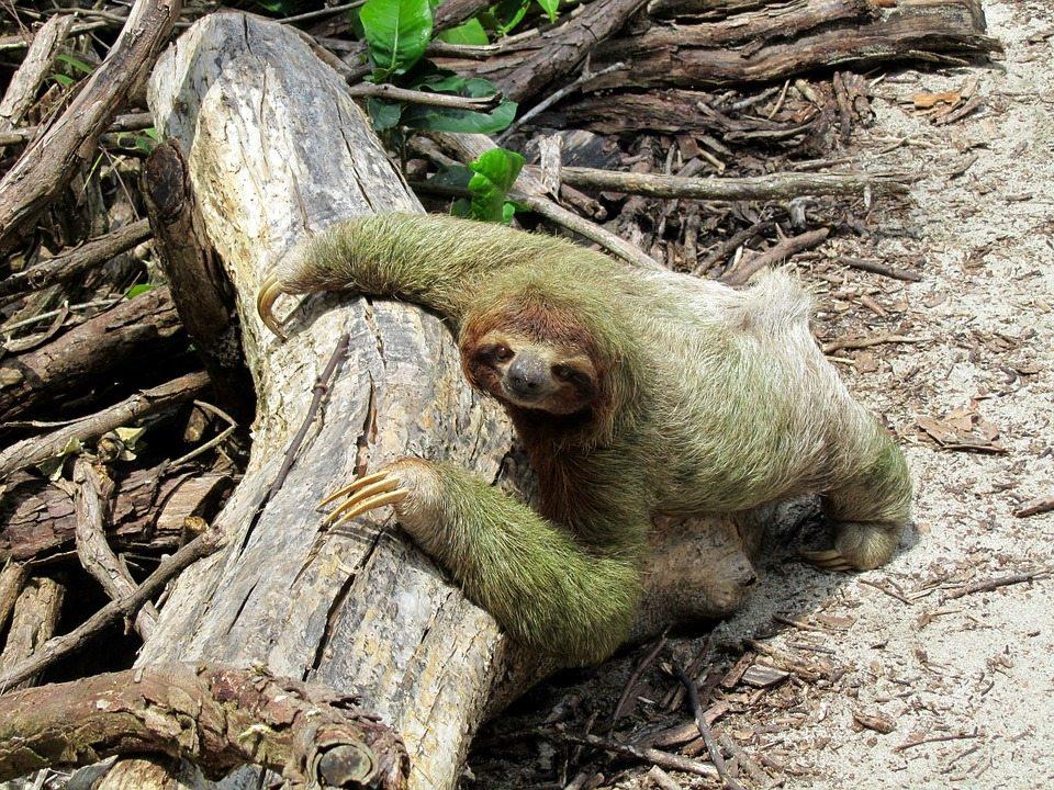 inactivity, sloth