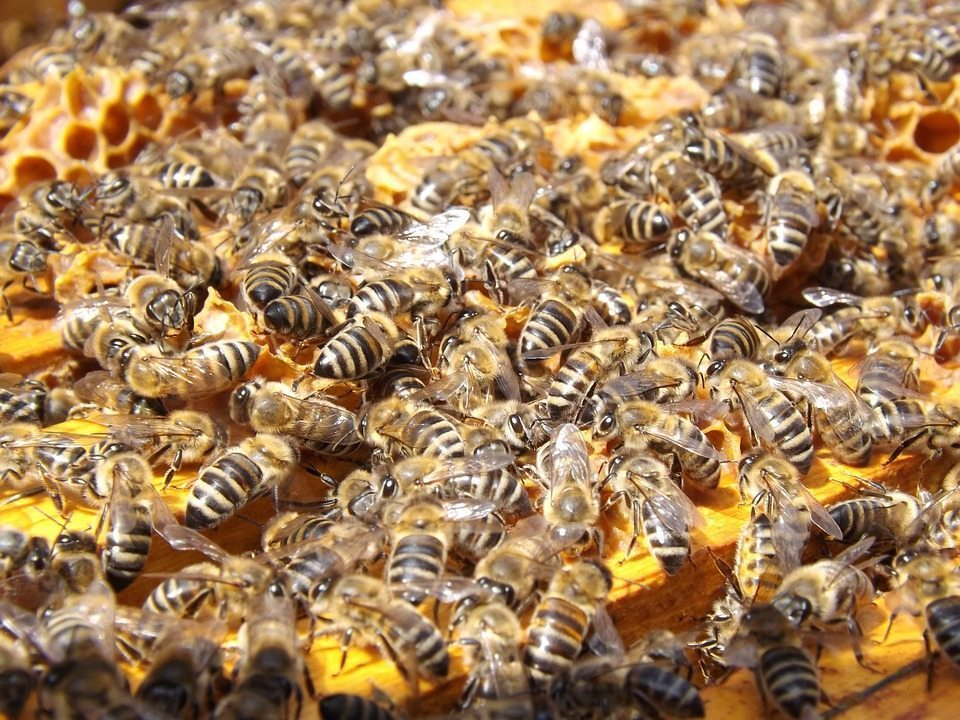 bees, busyness