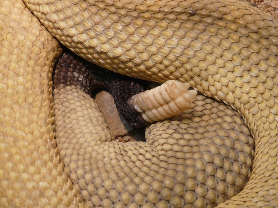 snake, sex obsession