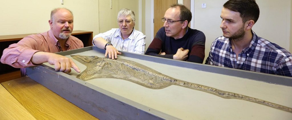 new ichthyosaur species